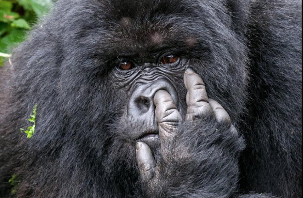 Naerutavad FOTOD | Maailma kõige naljakamate loomafotode konkursi võidutööd on klass omaette!