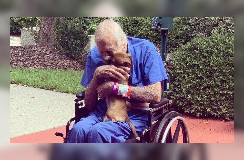 Tõeline elupäästja: chihuahua kutsus insuldi saanud peremehele abi