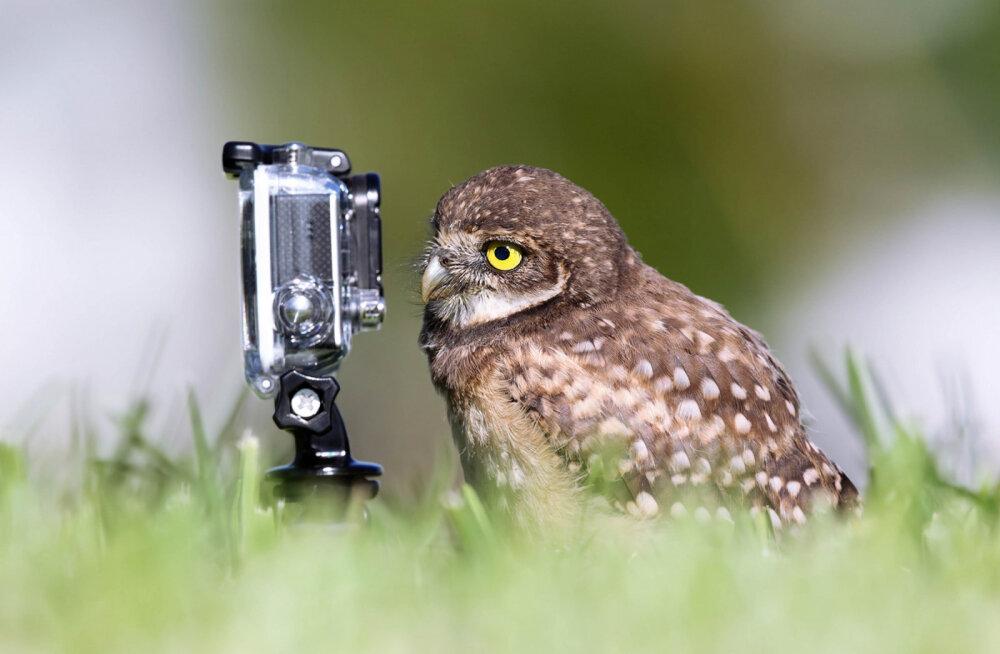 способом власти фотоохота на птиц объективы каждым