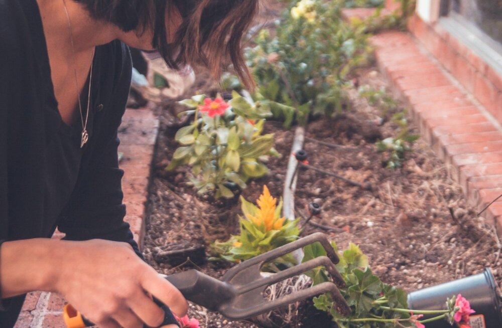 Näpud mulda! Viis head põhjust, miks taimede eest hoolitsemine on sinu vaimsele tervisele hea