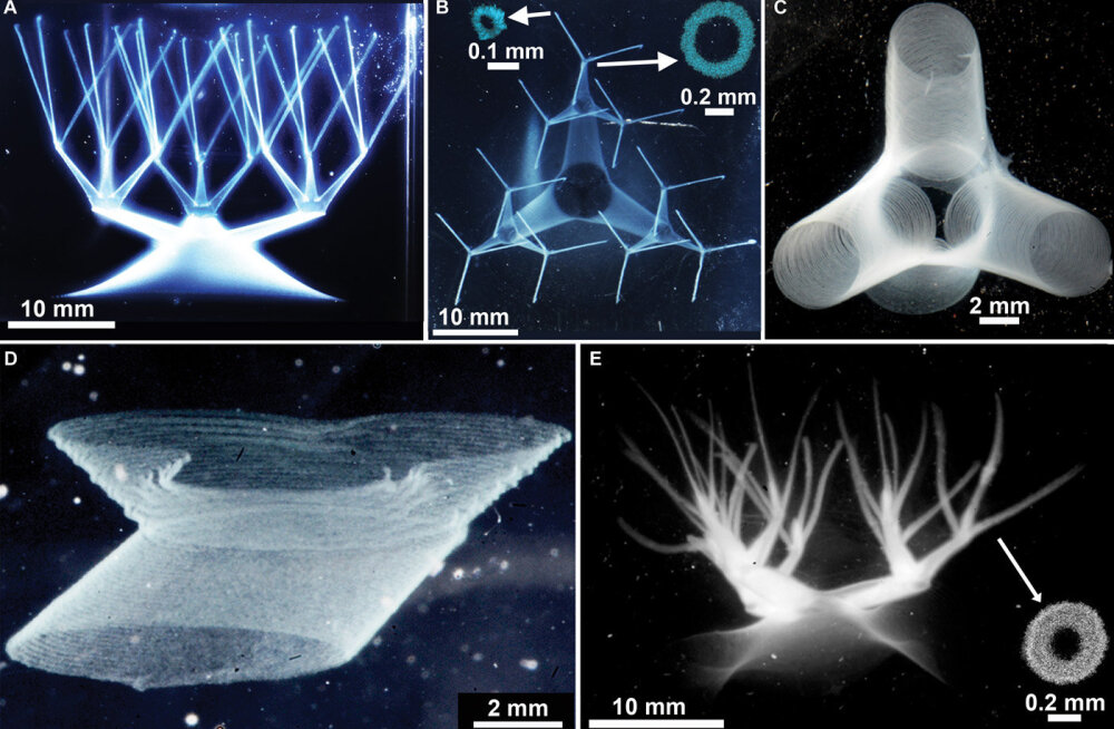 Teadlased leiutasid geeli, mille abil saaks välja printida inimese elundeid