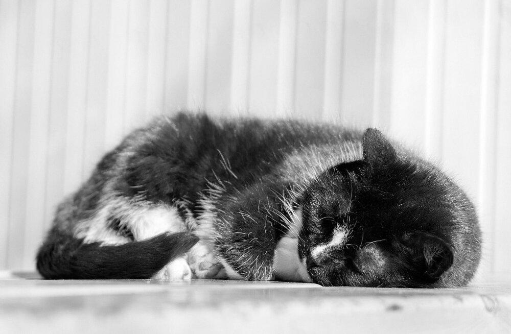 Pea terve päeva unes: mis toimub kassiga, kui ta magab?
