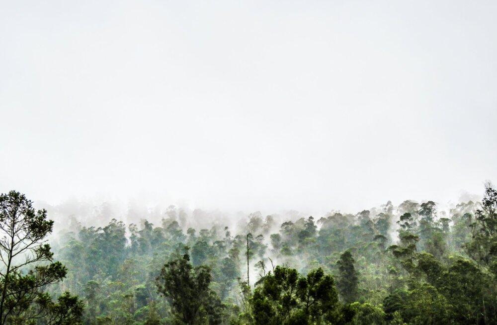 Ala, mille CO2 emissioon võrreldav 200 miljoni autoga