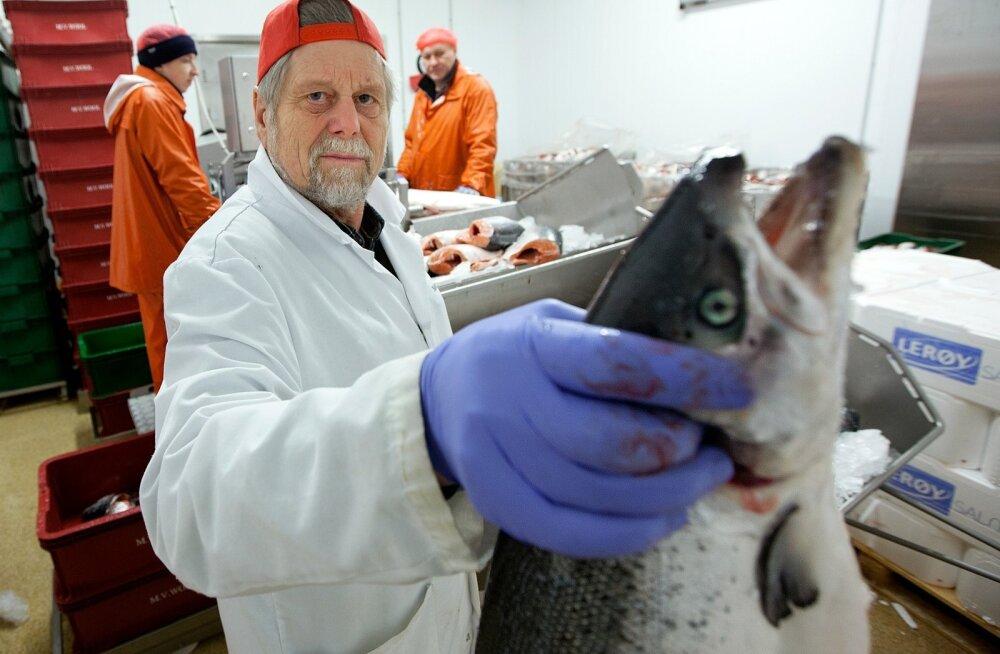 Mati Vetevool tunneb kalandust läbi ja lõhki. Fotol on ta M.V.Wool AS-i Harku kalatehases.