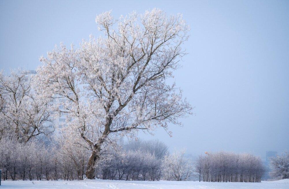Nädala prognoos: talve jagub ka edaspidiseks