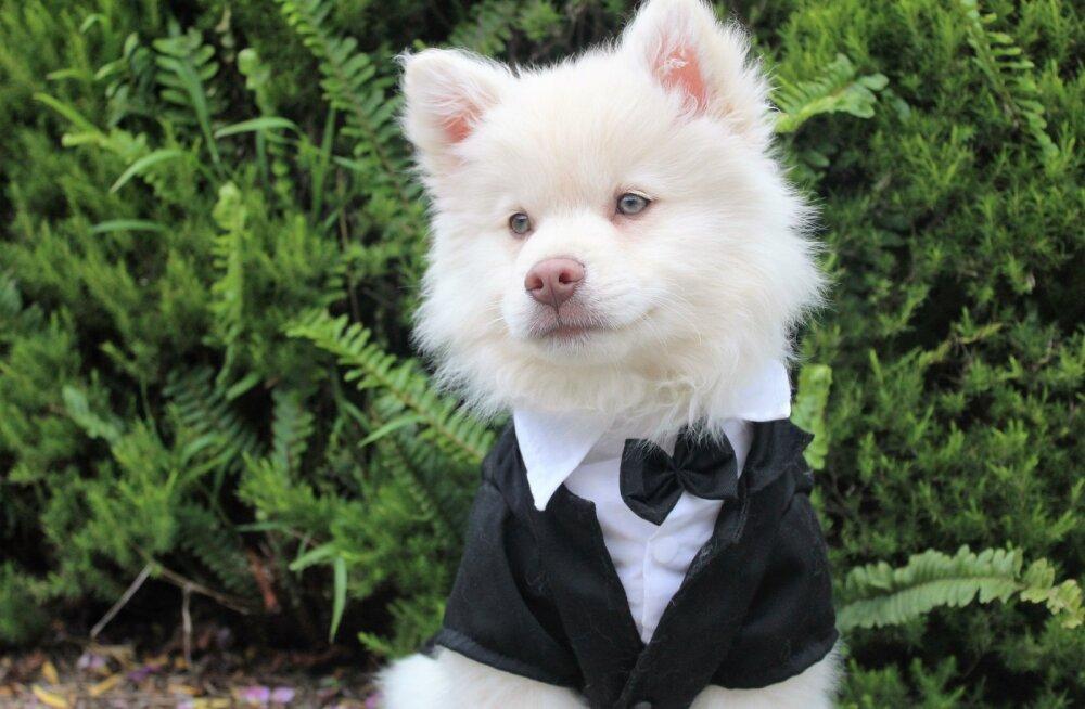 TOP 10   Mida pakuvad USA kõige luksuslikumad koerahotellid neljajalgsetele?