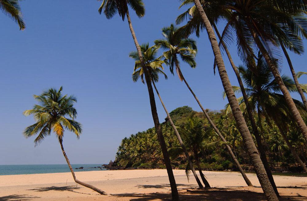 Планета Гоа: несколько причин поехать на море в Индию