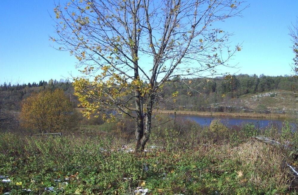 Lihhovas, sünnikodu kõrval asuvas järves, õppis Julius Kuperjanov ujuma.
