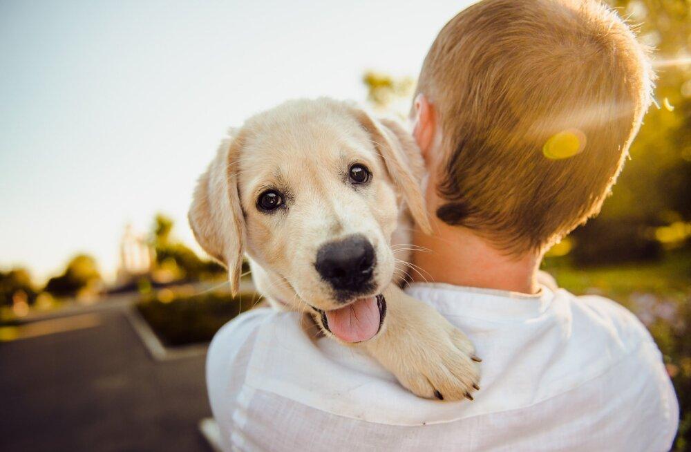 Jurist soovitab: lemmiklooma ostmisel on mõistlik sõlmida kirjalik ostu-müügileping