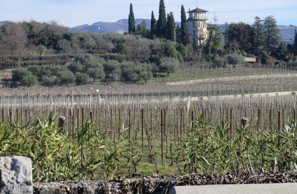 Garda järve äärsetel mäenõlvadel laiuvad viinamarjaistandused.