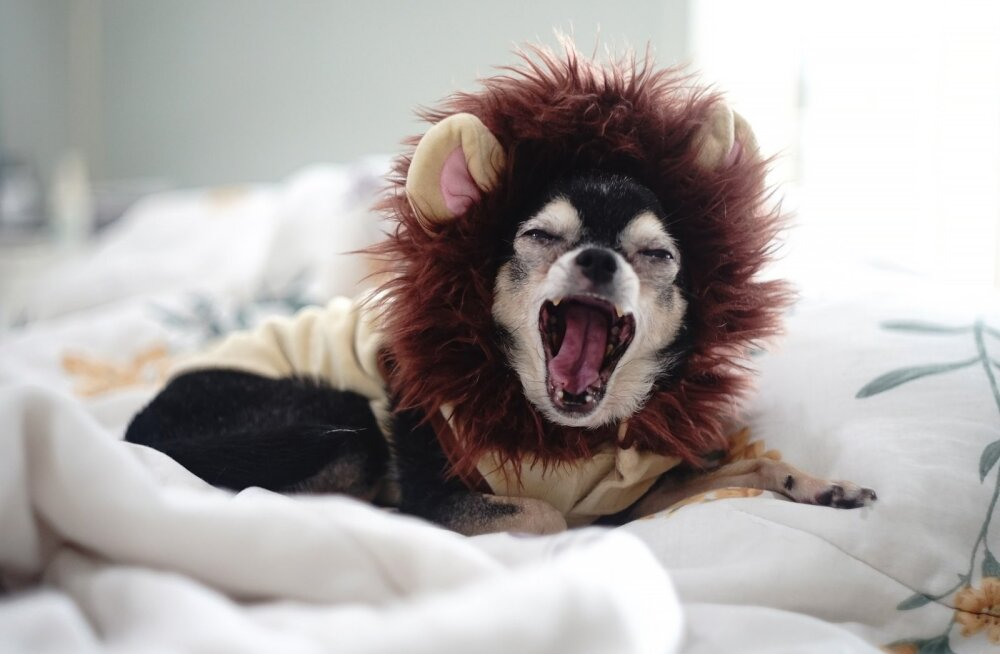 ТОП-10 самых глупых пород собак
