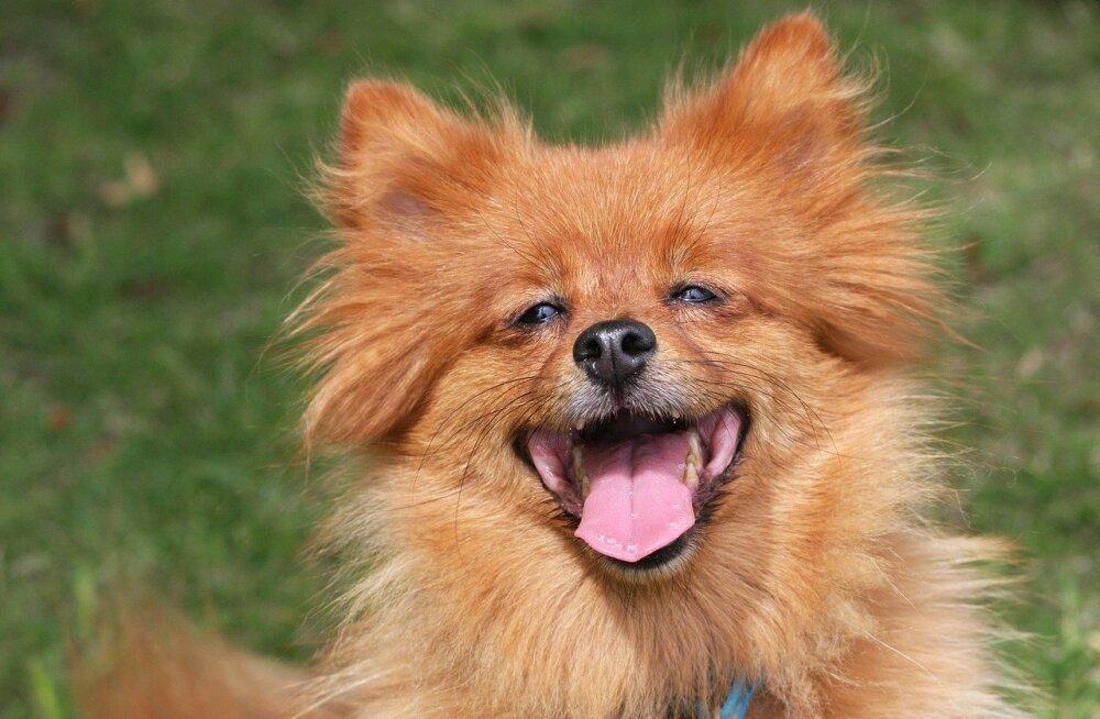 Põnev küsimus: kas koerad on füüsiliselt võimelised naerma?