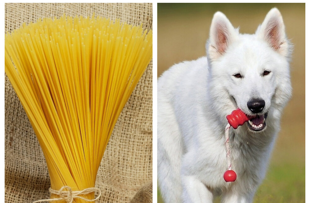 TOP 7 | Valged koerad ja Šveitsi spagetipuud: just need on maailma parimad aprillinaljad