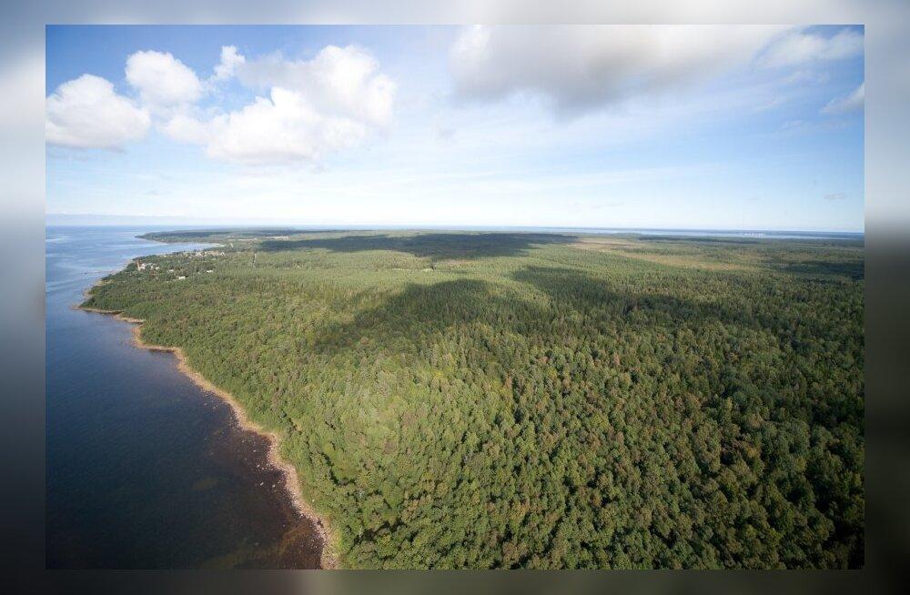 Metsaomanikud saavad tänasest ise metsateatist registreerida