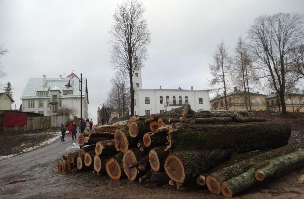 Viljandis saetakse puid maha