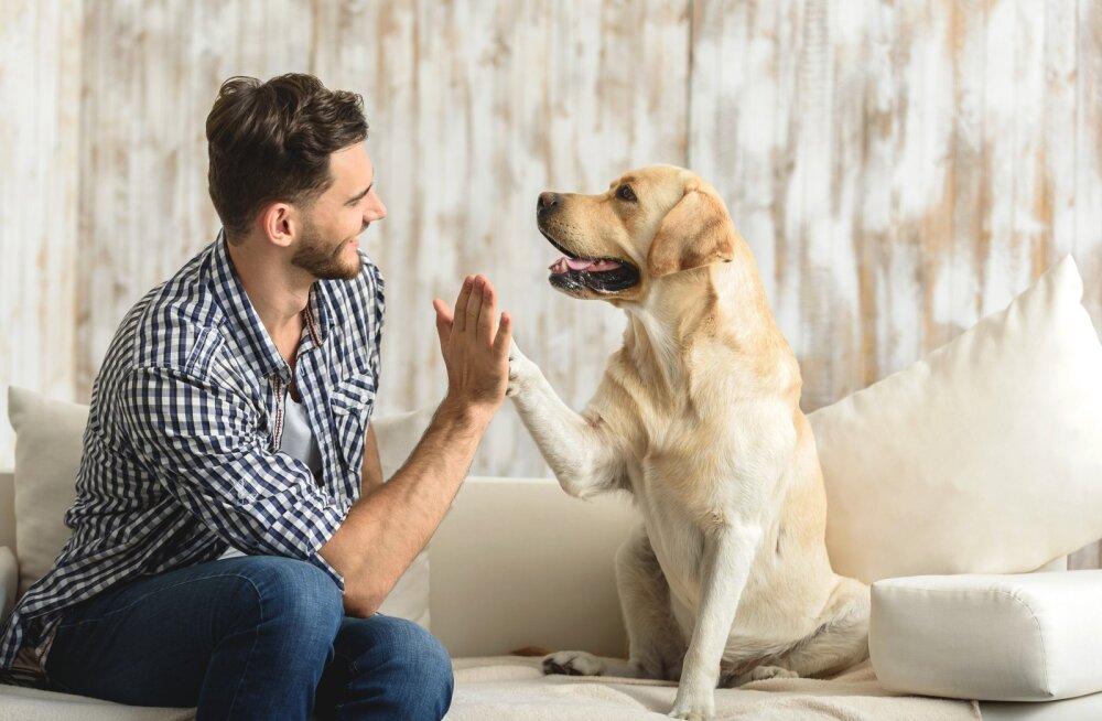 Lihtsaid nippe, kuidas veelgi enam tugevdada sidet oma lemmikloomaga