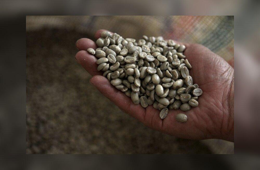 Kuidas kofeiin kohvioa seest kätte saadakse (ja mida sellega tehakse)
