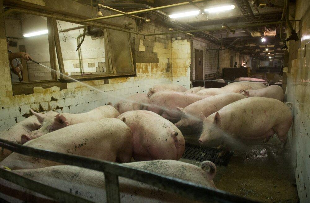 Seakasvataja: põllumajandustootjatel on valeinfost kõrini