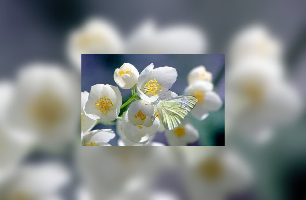 Kui mõelda iga päev kõigele elusolevale rahumeelsete mõtetega, saab nende mõtete omanikule osaks rohkesti rahu