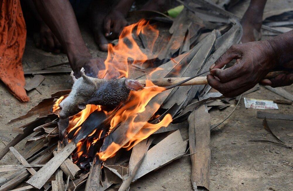 Bihari osariigi Alampur Gonpura külas elavad <em>musahar</em>'id küpsetavad rotti.