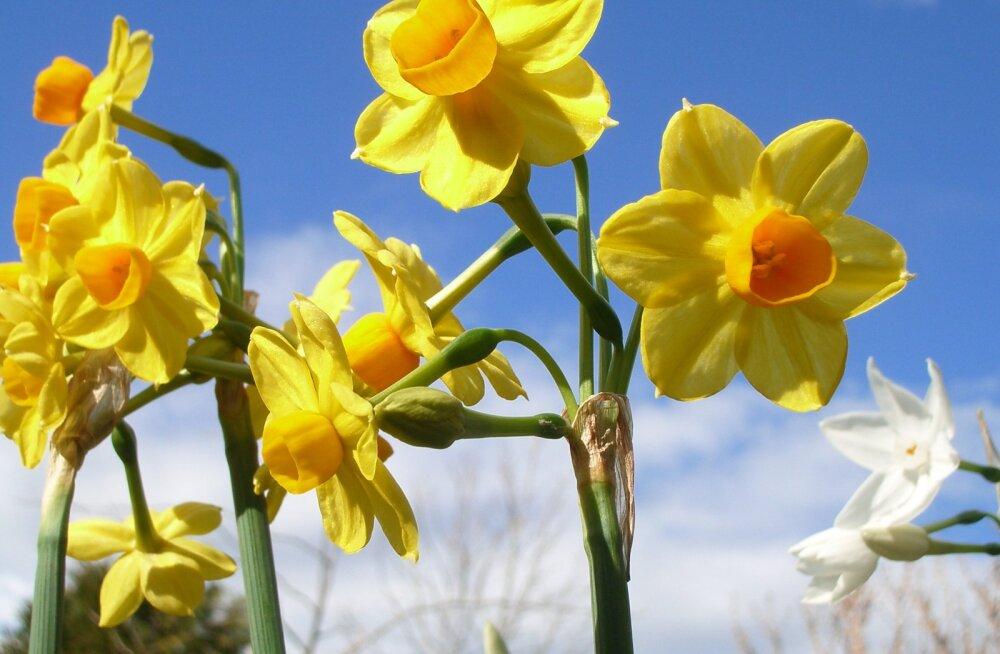 Seitse näpunäidet, millega oma sisemine sära ja elurõõm talveunest üles äratada