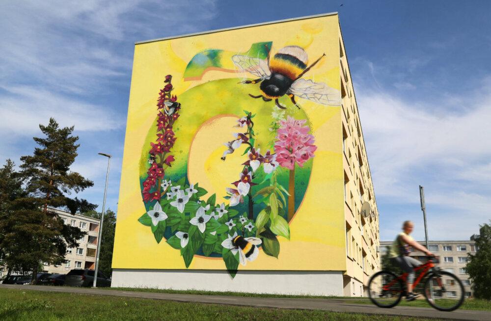 ФОТО   Суперграфика в виде буквы Õ украсит фасад еще одного дома в Ыйсмяэ