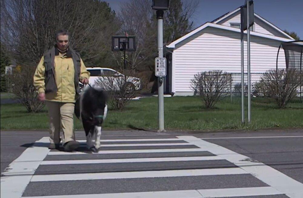 VIDEO: Hämmastav hobune! Kas sa oled varem juhthobust kohanud?