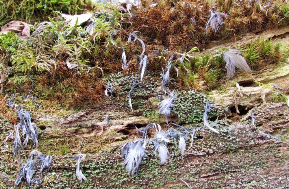 Leili metsalood | Looduses käivad elu ja surm käsikäes