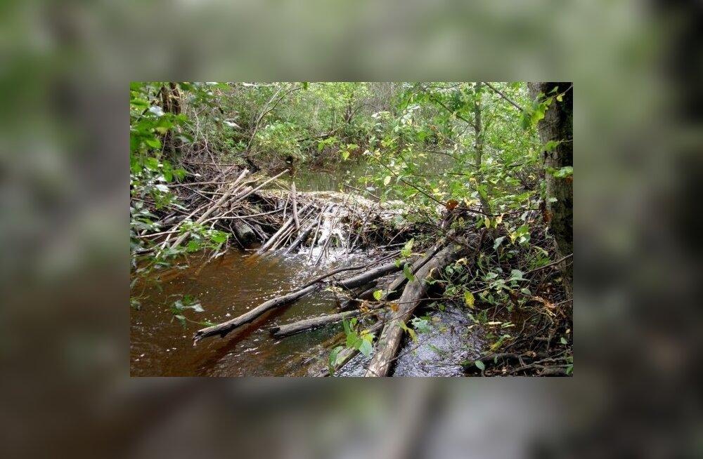 Võrumaal leiti kopra tammi lõhkudes eest mürsk