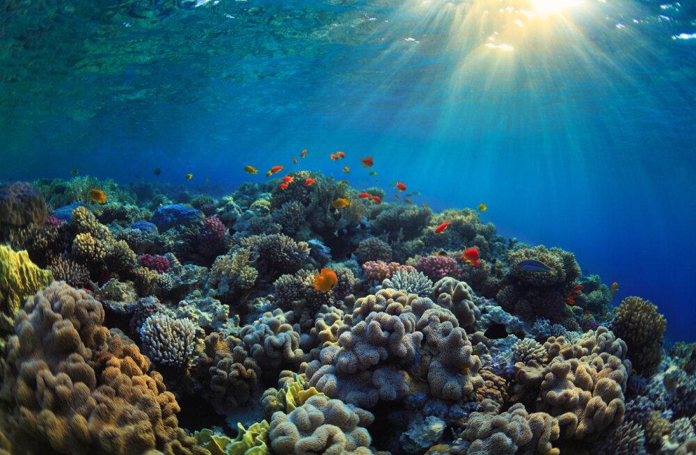 Suurest Vallrahust on 25 aastaga kadunud pooled korallid
