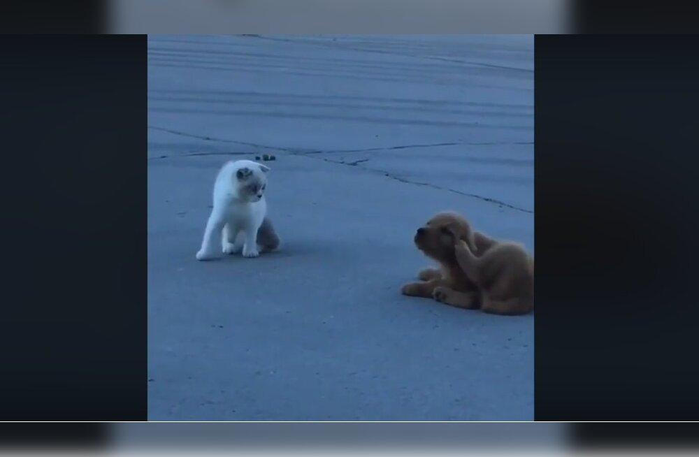VIDEO | Kehakeele musternäidis: vaata, mida teeb kass, kui kutsikas talle vargsi saba alla hiilib!