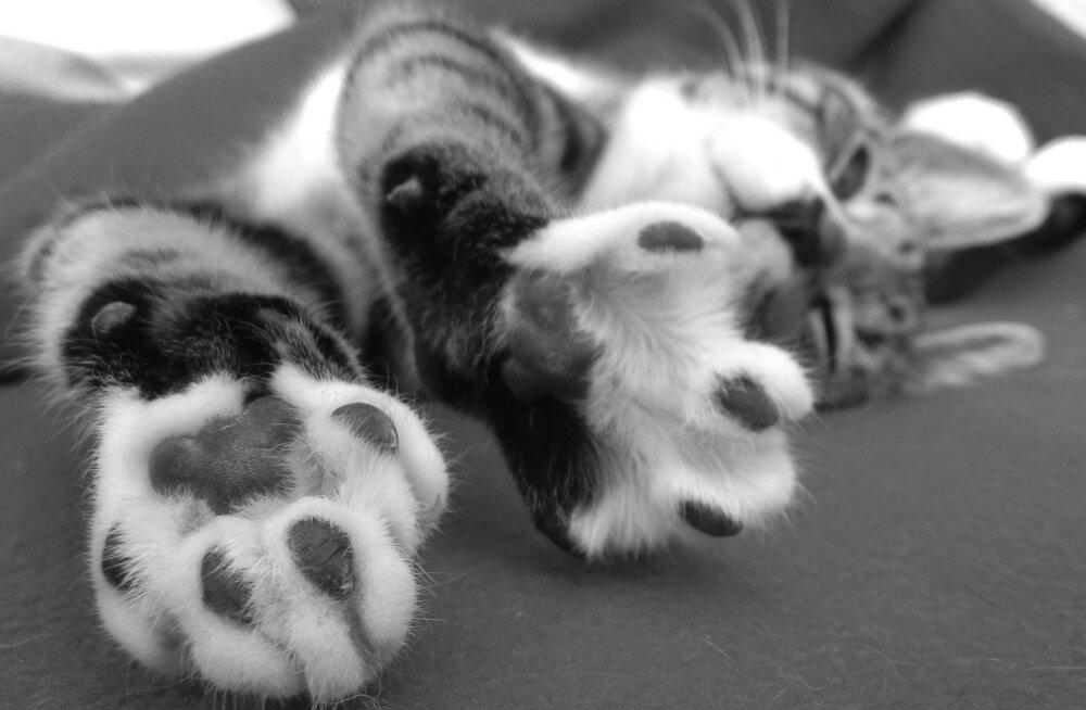 Humoorikas juhtum: Omanik valiti kassi süül kogemata kohalikku omavalitsusse