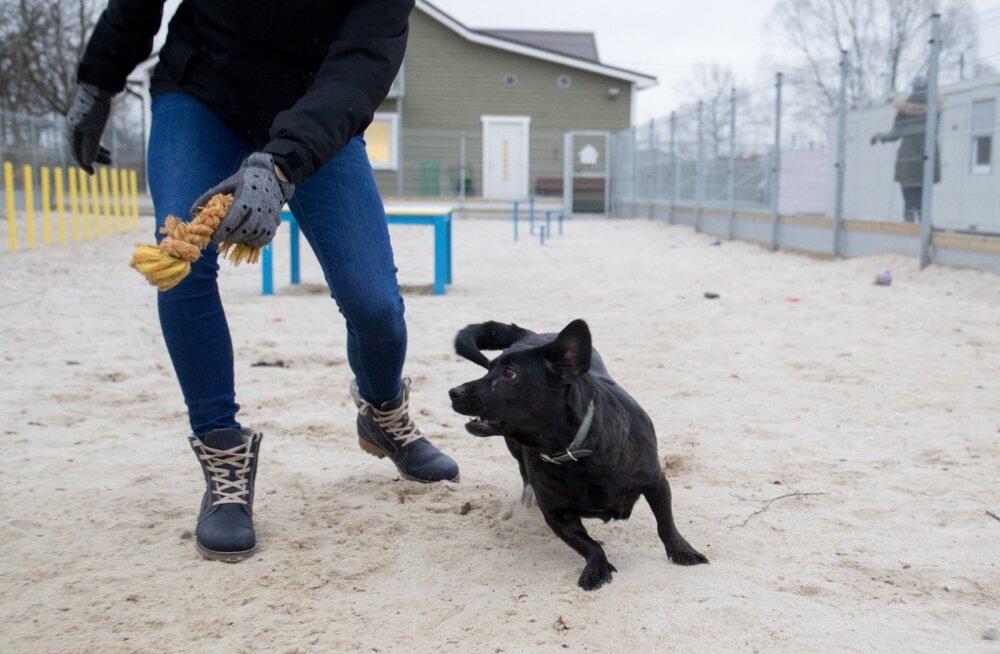 Lemmikloomad, Tallinna loomade varjupaik