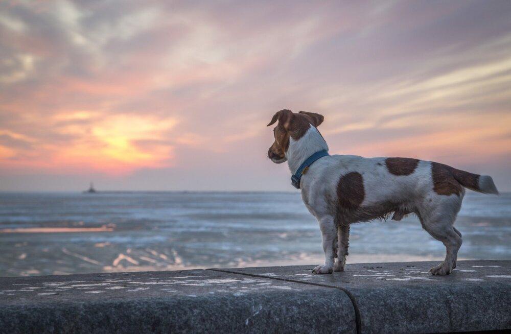 Mida teha, kui lemmikloom läks kaduma? 9 nippi, kuidas ta kiiremini üles leida
