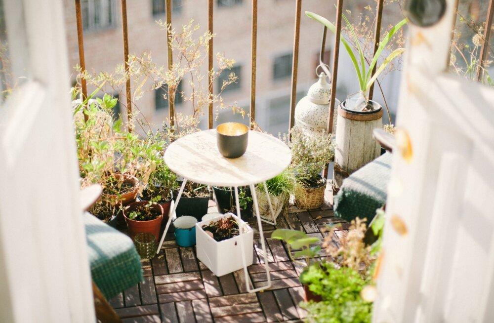 Nipid korterielanikele: kümme viisi, kuidas väikesest rõdust teha suveks ilus aed