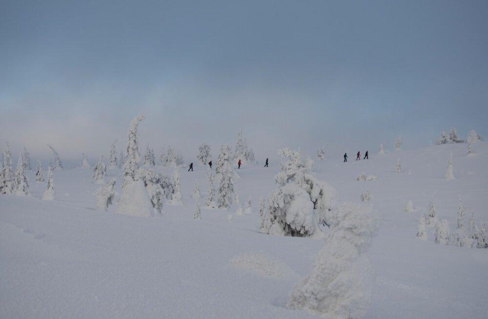 Почему Лапландия — рай для настоящих романтиков