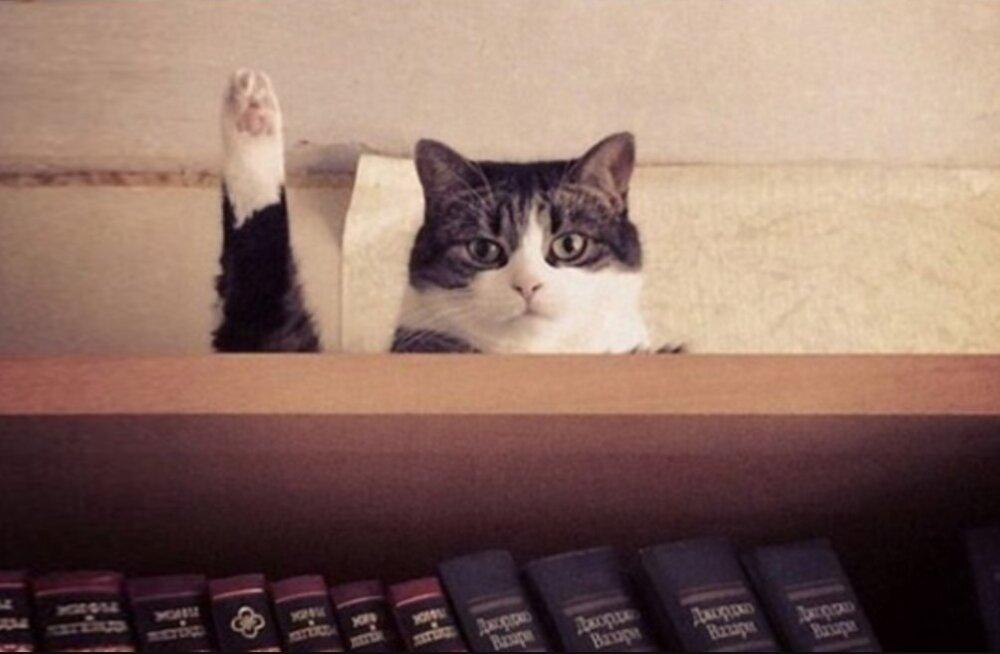 Fantastiline GALERII kassidest | õigel ajahetkel tabatud foto on parem kui tuhat sõna!