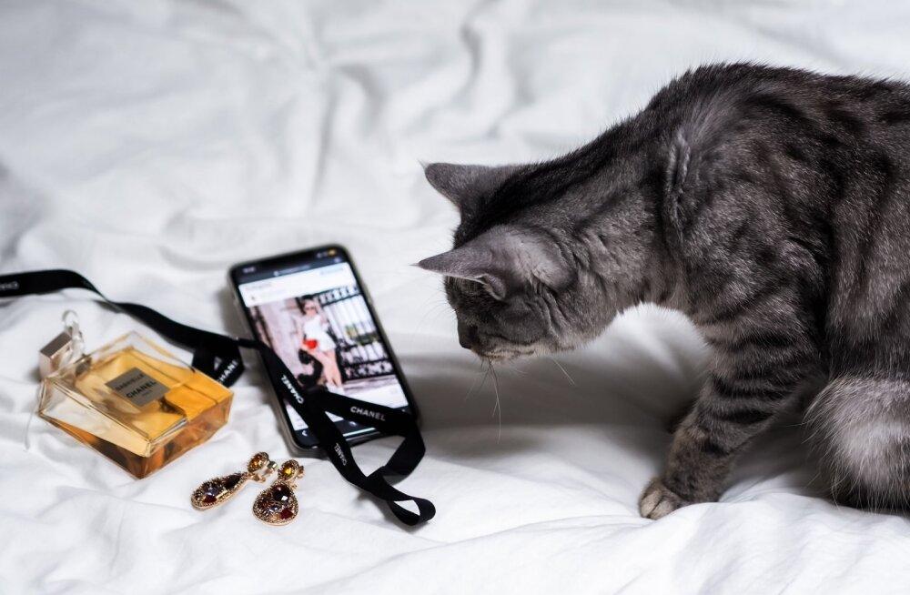 Приложение для распознавания мяуканья поможет понять, чего хочет ваша кошка