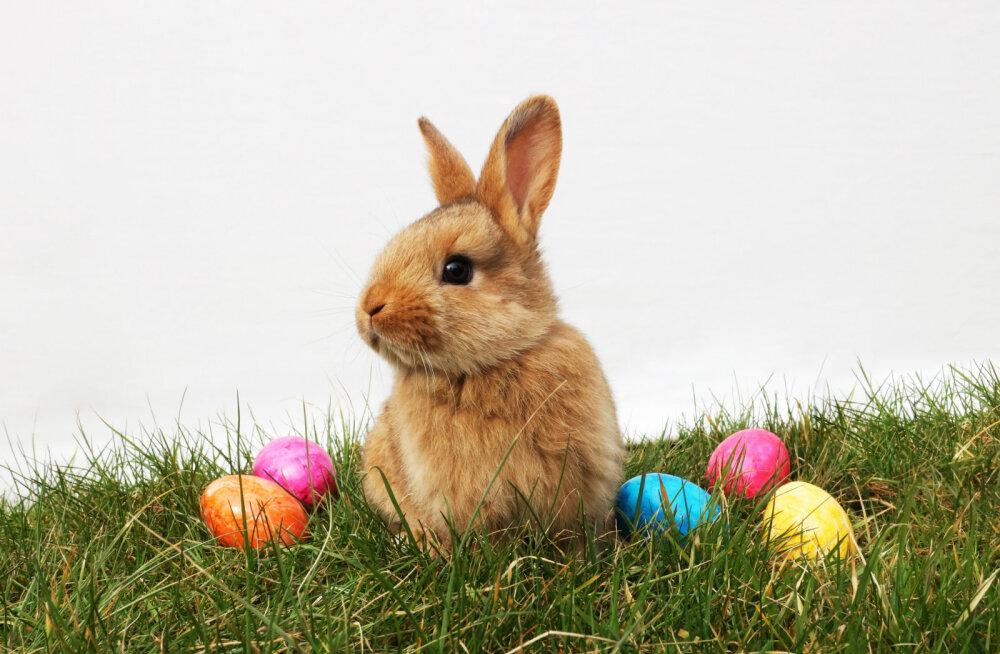 Хотите написать письмо пасхальному зайцу? Можете сделать это по одному из трех адресов