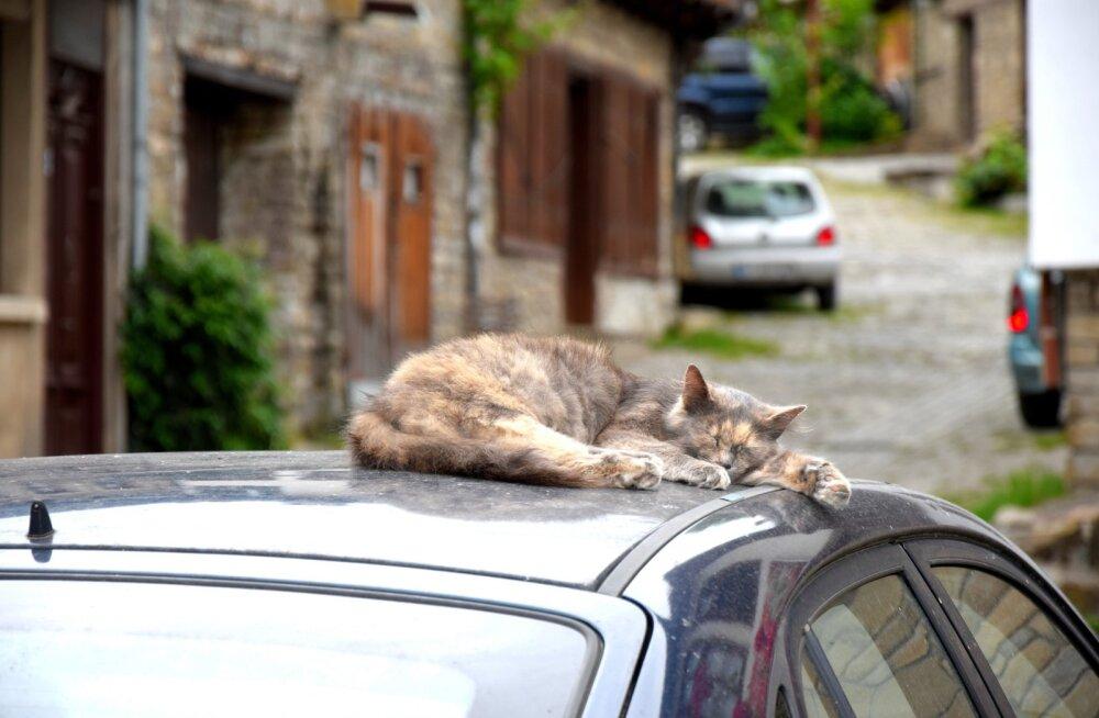 Eestimaa Loomakaitse Liit hoiatab: märka kassipoega oma autokapoti all!