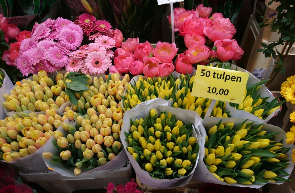 FOTOD   Vaata, mida ägedat müüakse kuulsal Amsterdami lilleturul