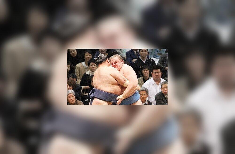 Baruto, sumo