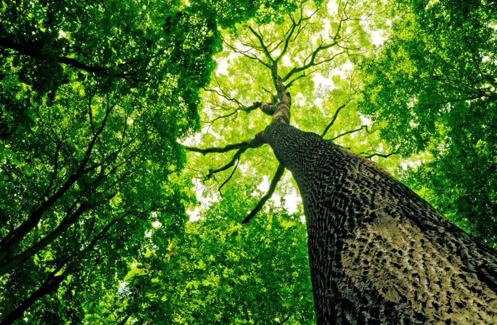 Taimed suhtlevad üksteisega seenepõhise interneti teel