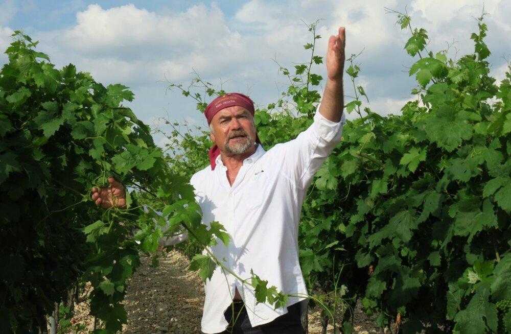 Radoslav Bobanovic armastab veini, viinamarju ja hobuseid.