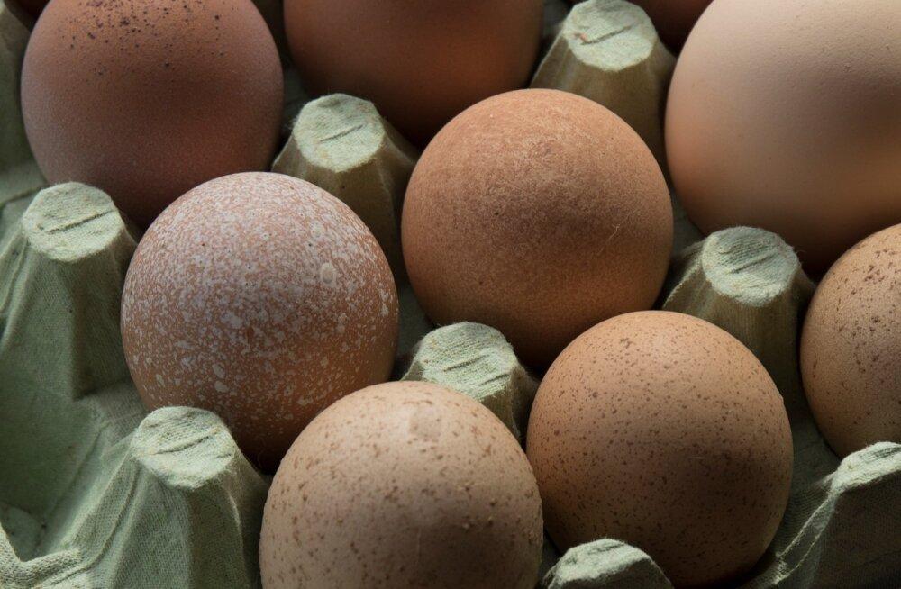 Mäeotsa talu kanad, kuked, tibud, värvilised munad