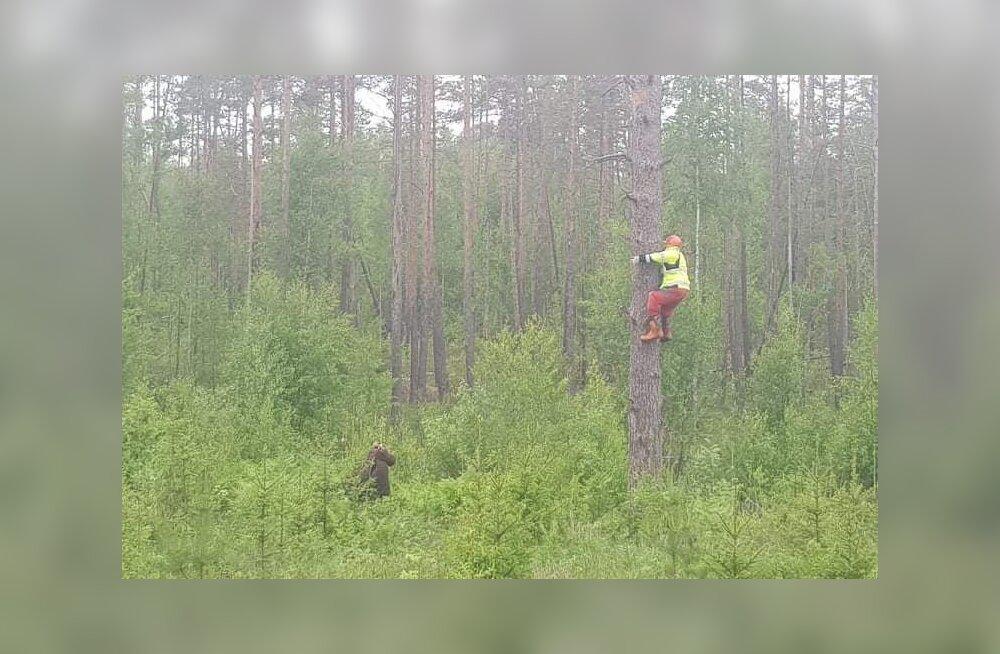 FOTO | Mustvees teatati karu eest puu otsa põgenenud inimesest