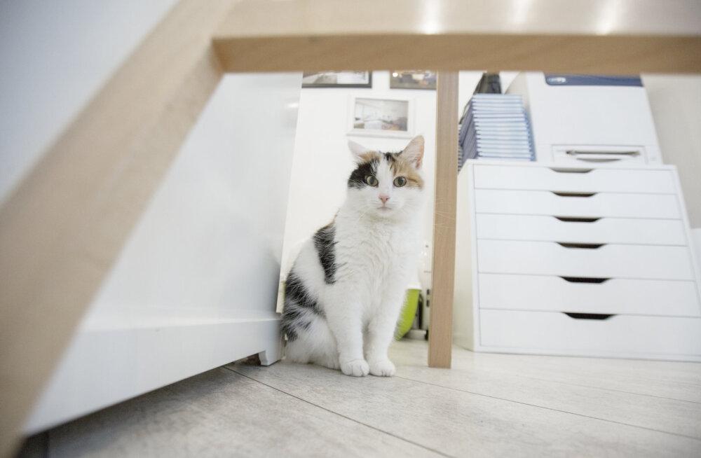 Siena lugu: varjupaiga kass, kes sai endale koguni kaks uut kodu