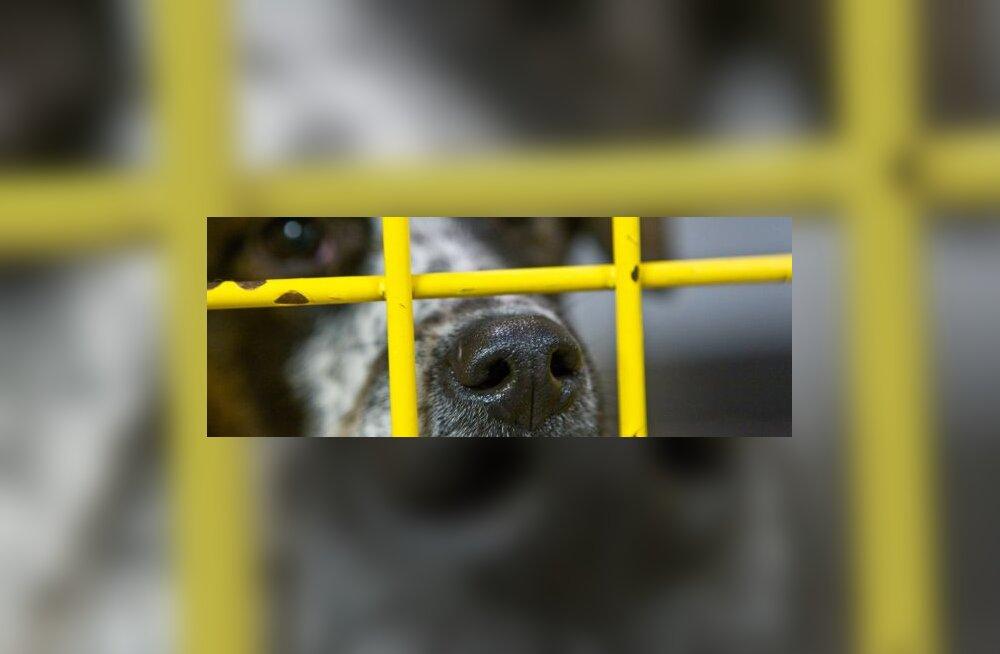 Pärnu koerte varjupaik annab endast parima?