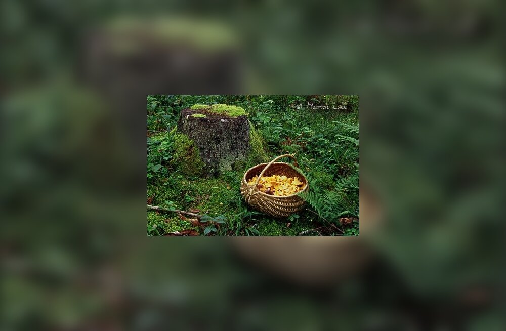 Kukeseen — seenelise üks lemmikuid