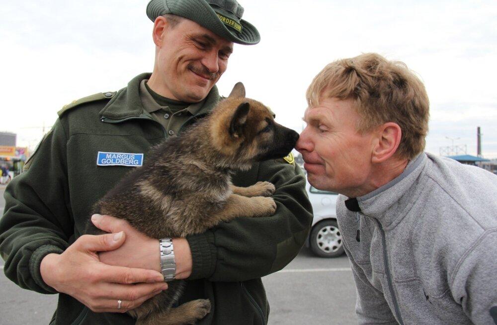 Pildil tervitab Tõnu Tänav tänavu Soomest toodud saksa lambakoera kutsikat Iro